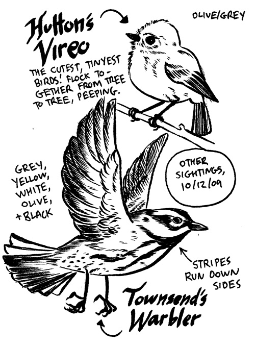Vireo&Warbler-Preview