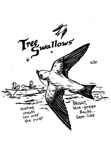 treeswallowssmall